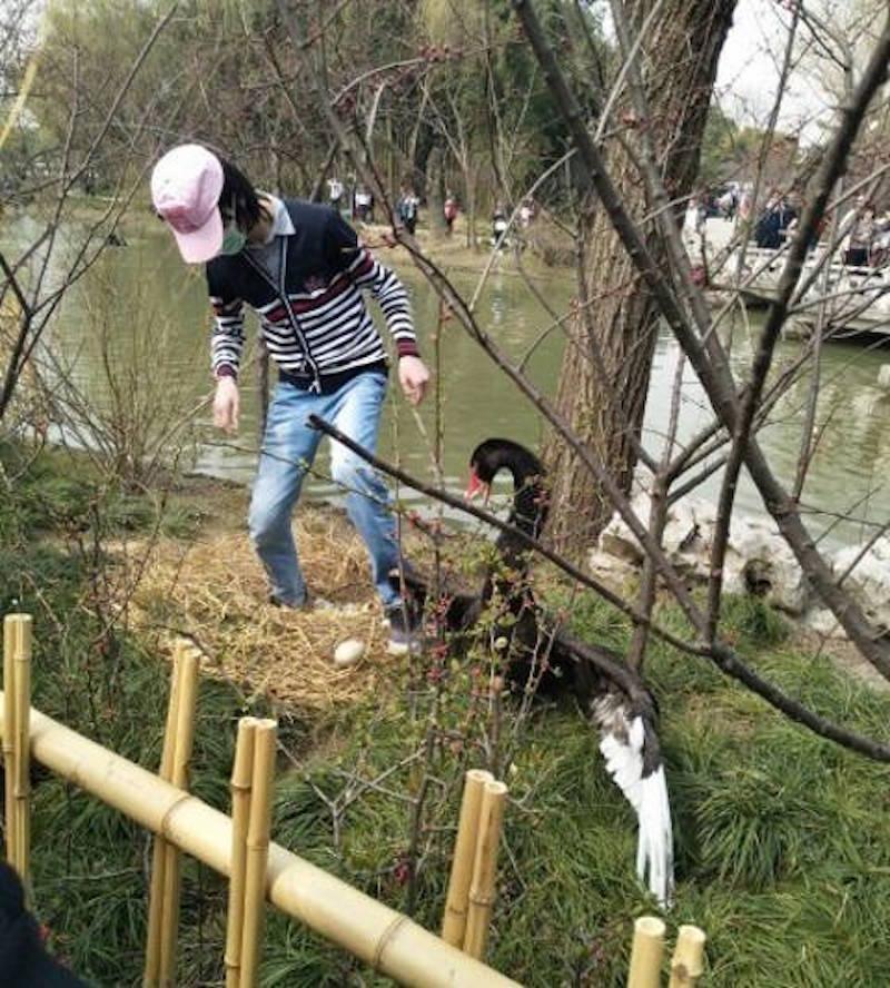 Κύκνοι κακοποίηση ζώων ζώα απίστετο αδέσποτοι σκύλοι