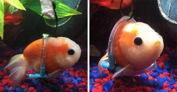 Ψάρι δε μπορούσε να επιπλεύσει και έτσι του έφτιαξαν μια μικρή αναπηρική καρέκλα
