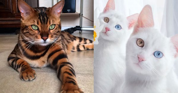 28 από τις πιο όμορφες γάτες του κόσμου