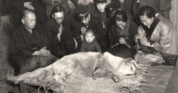 Χάτσικο: Ο σκύλος που με το θάνατό του έκανε μια ολόκληρη κοινωνία να βυθιστεί στο πένθος