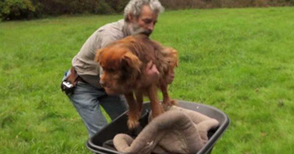 Σκύλος ήταν αλυσοδεμένος για 14 Χρόνια. Η στιγμή που ένας παππούς τον παίρνει για 1η φορά αγκαλιά, θα σας κάνει να δακρύσετε..