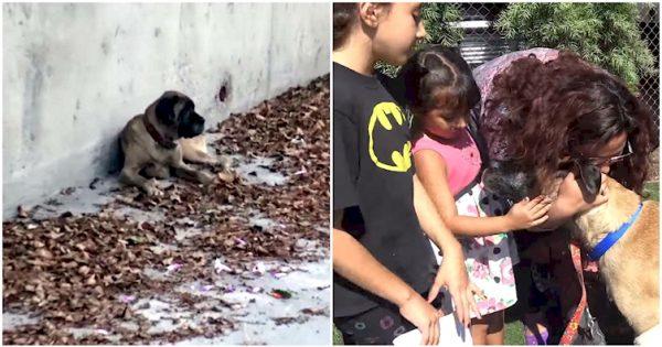 Ο σκύλος τους είχε χαθεί και περιπλανιόταν μόνος για μέρες. Δείτε τη συγκινητική στιγμή της επανασύνδεσης με την οικογένειά του!