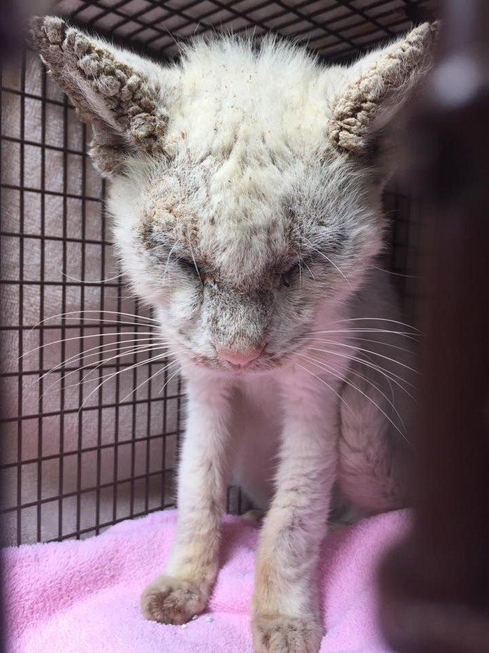 γάτος Γάτα αδέσποτος γατούληςα Αδέσποτος γατούλης εντυπωσιάζει τους διασώστες του με τα πανέμορφα μάτια του αδέσποτος γάτος αδέσποτος αδέσποτη γάτα