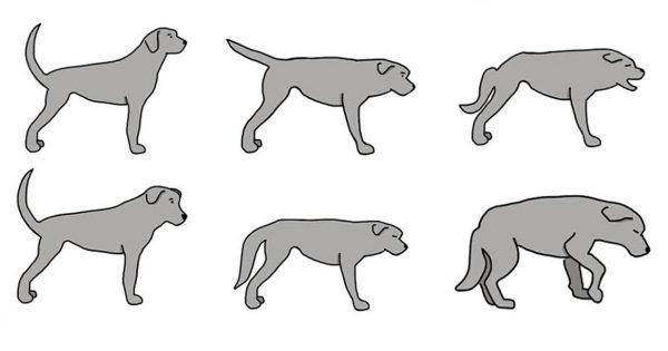 11 μυστικά που κρύβει η κίνηση της ουράς ενός σκύλου που όλοι πρέπει να γνωρίζουμε.