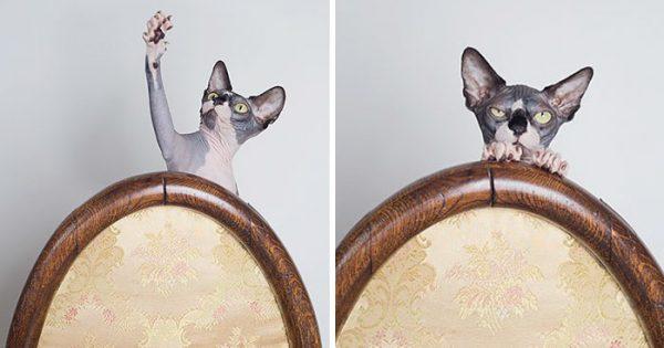 Δημιουργικές φωτογραφίες γατών από την Catherine Holmes