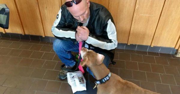 Σκύλος 18 χρονών που ζει σε καταφύγιο ζώων βρίσκει τον ιδανικό μπαμπά!