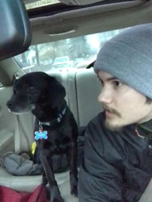 Σκύλος σκύλοι ρίσκαρε τη δουλειά του για να βοηθήσει έναν σκύλο