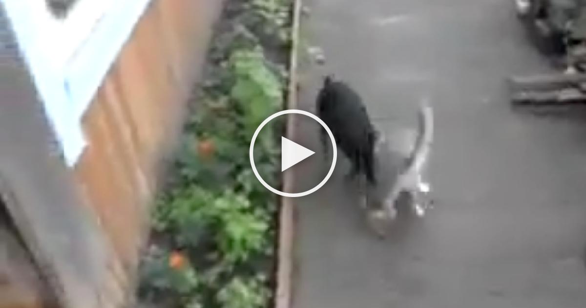 σκύλος με γάτα σκύλος γάτα Σκύλος σκύλοι με γάτες σκύλοι γάτες σκύλοι Λέει στο σκύλο της να φέρει την γάτα στο σπίτι! Δείτε ΤΙ έκανε αυτός και θα κλαίτε από τα γέλια! γάτος γατί Γάτα