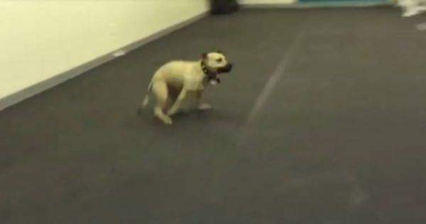 Σκύλος δοκιμάζει πίτσα για πρώτη φορά στη ζωή του. Προσέξτε τώρα την ΕΠΙΚΗ του αντίδρασή..!