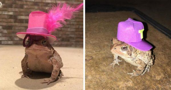 Αυτός ο βάτραχος ερχόταν συνέχεια στη βεράντα ενός άνδρα οπότε αυτός άρχισε να του φτιάχνει μικροσκοπικά καπέλα