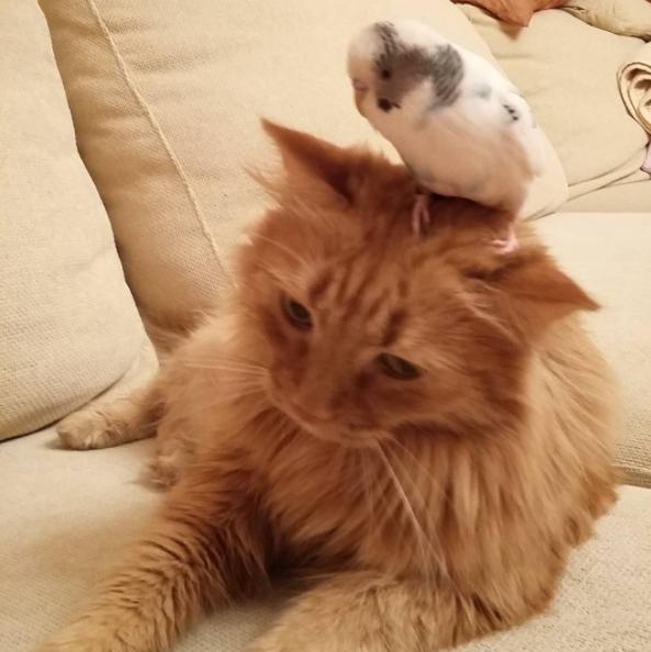 παπαγάλος Παπαγάλοι γάτος γάτες Γάτα Αυτή η γάτα και αυτός ο παπαγάλος κάνουν τα πάντα μαζί