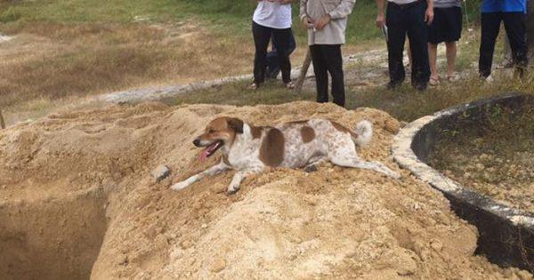 Σκύλος ακολουθεί την πομπή που μεταφέρει την νεκρή φίλη του για 3 χιλιόμετρα ώστε να πει αντίο