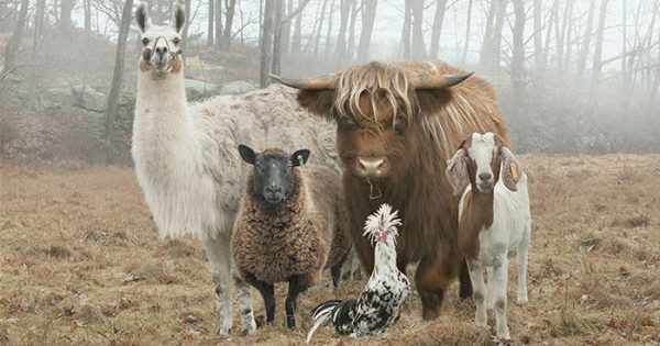 Αυτός ο φωτογράφος φωτογραφίζει ζώα σε φάρμες όπως κανείς άλλος