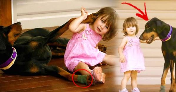 Ο σκύλος δάγκωσε την 17 μηνών κόρη της και την πέταξε μακρυά. Μόλις κατάλαβε ΓΙΑΤΙ το είχε κάνει, πάγωσε!