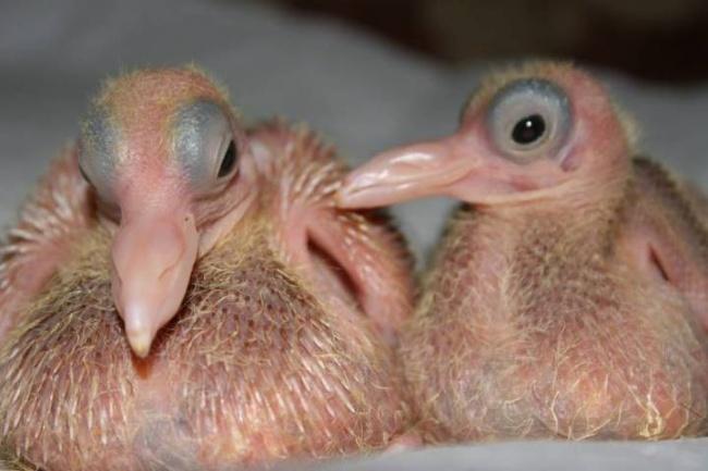 μωρά ζωάκια μωρά ζωάκια
