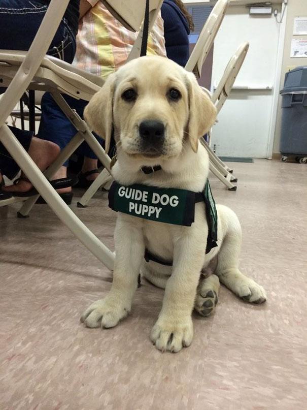 σκυλάκια φύλακες σκυλάκια κουτάβια κουταβάκια εικόνες από σκυλάκια εικόνες από κουτάβια