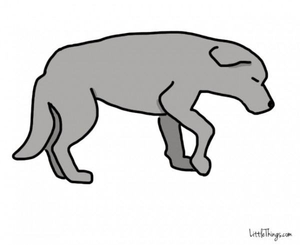 η κίνηση της ουράς ενός σκύλου 11 μυστικά που κρύβει η κίνηση της ουράς ενός σκύλου που όλοι πρέπει να γνωρίζουμε.
