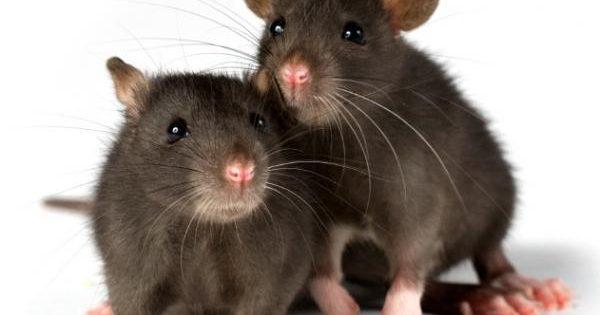 Τα 10 πιο έξυπνα ζώα του πλανήτη!