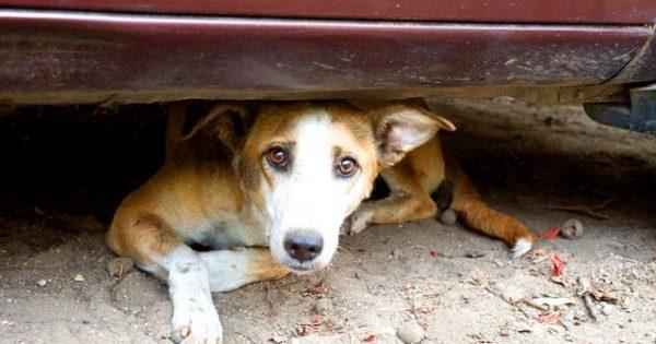Ραφήνα: Δίνουν 3.000 ευρώ σε όποιον αποκαλύψει τον άνθρωπο που εκτελεί με αεροβόλο σκυλιά στο κεφάλι