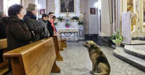 Ο σκύλος που πηγαίνει κάθε μέρα στην εκκλησία που κηδεύτηκε η ιδιοκτήτριά του, με την ελπίδα να την δει