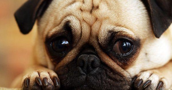 15 λυπημένα κουτάβια που θα σας… χαλάσουν τη μέρα!