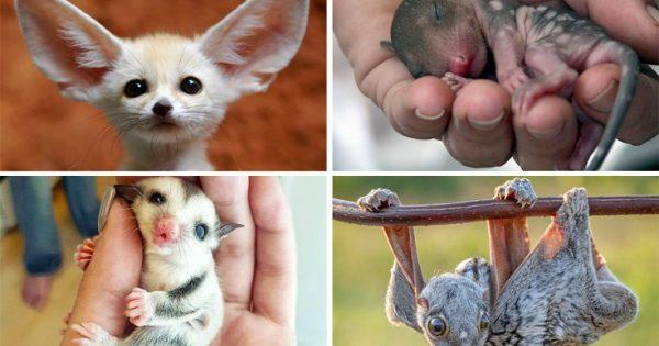 Φωτογραφίες όλο γλύκα: Σπάνια μωρά ζώα που δε συναντάς συχνά