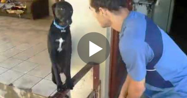 Ο σκύλος του έκανε κάτι πολύ κακό, αλλά μόλις το αφεντικό του πήγε να τον μαλώσει; Προσέξτε την φάτσούλα του…Θα λιώσετε!
