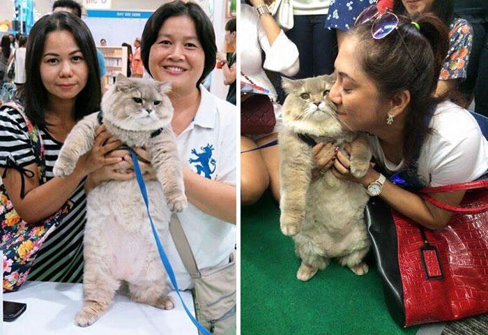 φουντωτός γάτος Γάτος από την Ταϊλάνδη είναι τόσο φουντωτός που όλοι θέλουν μια φωτογραφία μαζί του