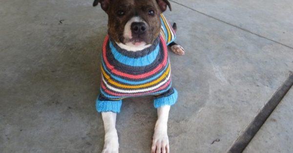 Σκυλάκια που κανείς δεν ήθελε παίρνουν αξιαγάπητα πουλόβερ με σκόπο να τα βοηθήσουν να βρουν σπίτι