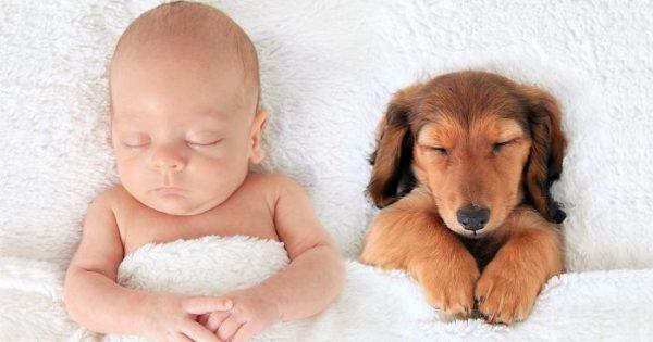 Φωτογραφίες που αποδεικνύουν ότι οι σκύλοι είναι καλύτεροι από τα μαξιλάρια