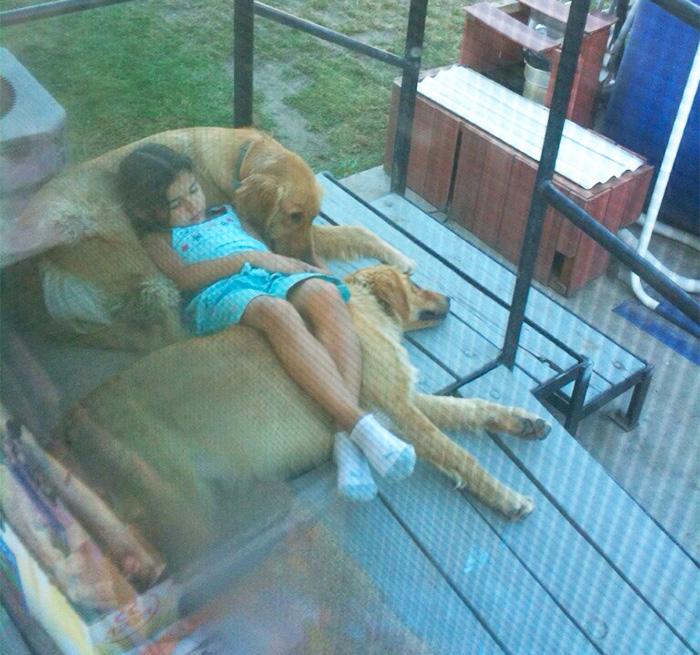 Φωτογραφίες που αποδεικνύουν ότι οι σκύλοι είναι καλύτεροι από τα μαξιλάρια Σκύλος σκύλοι οι σκύλοι είναι καλύτεροι από τα μαξιλάρια