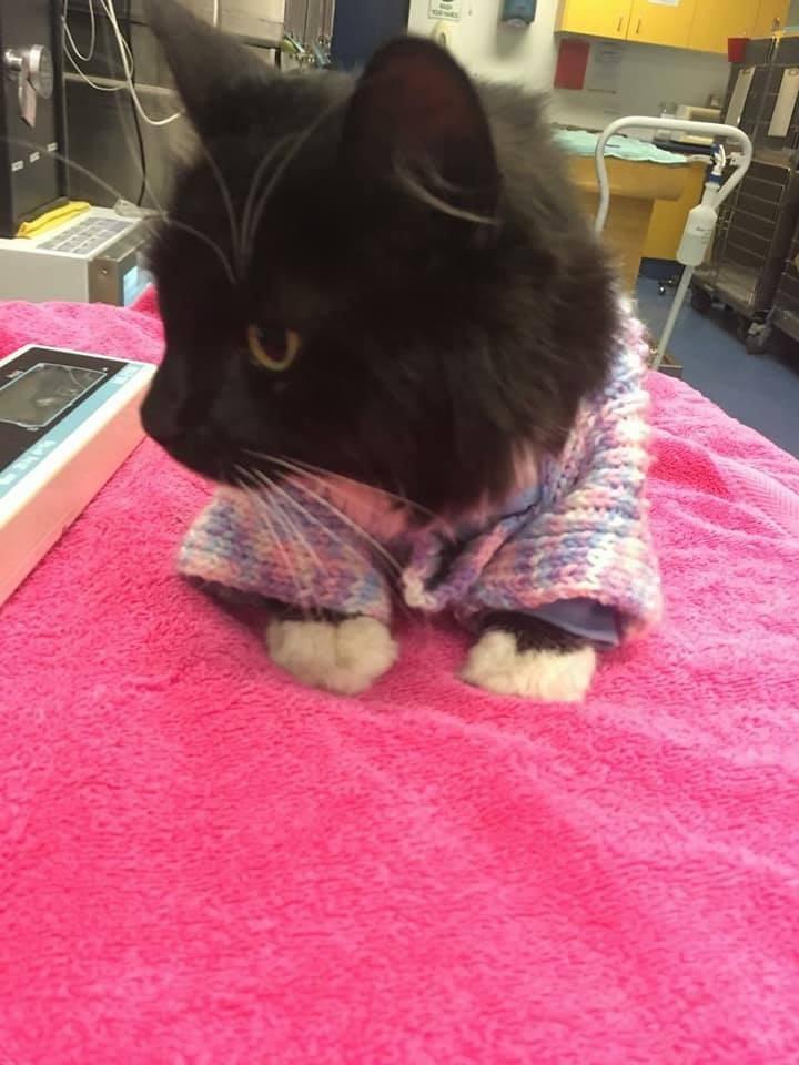 γάτος γάτες γάτα σχεδόν πνίγηκε Γατά που σχεδόν πνίγηκε σε πλημμύρα απολαμβάνει πλέον το νέο της πουλόβερ Γάτα