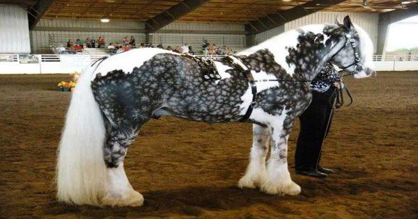 Αυτά είναι τα 24 πιο όμορφα άλογα του κόσμου, που δεν θα πιστεύετε ότι είναι αληθινά!