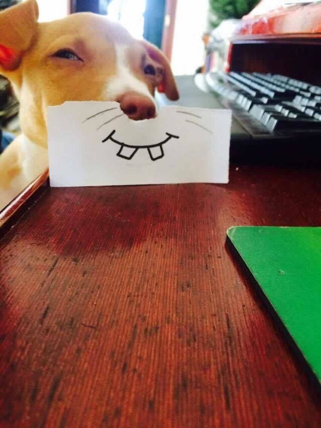 Σκύλος πανέμορφα κουταβάκια κουτάβι κουταβάκια κουταβάκι 20 πανέμορφα κουταβάκια που θα σας κάνουν να ξεχάσετε τα προβλήματα σας.