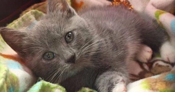 Γατάκι που γεννήθηκε χωρίς ένα πόδι και ζούσε σε καταφύγιο ζώων βρίσκει μαμά την τελευταία στιγμή