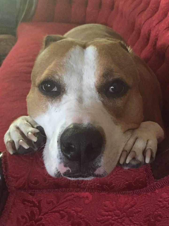 Σκύλος σκύλοι Κουτάβι που βρέθηκε δεμένο σε ένα δέντρο αλλάζει την εικόνα του κόσμου για τα pitbull Κουτάβι που βρέθηκε δεμένο κουτάβι