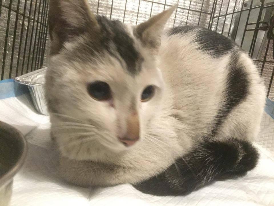 Ένας σταθμός του μετρό της Νέας Υόρκης έκλεισε για να διασωθεί μια αδέσποτη γάτα παγιδευμένη στις γραμμές γάτες Γάτα αδέσποτη γάτα