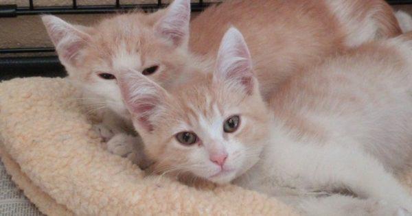 Δύο γάτες αδέρφια που είχαν χωριστεί για 2 χρόνια επανενώθηκαν επειδή οι ιδιοκτήτες τους βγήκαν ραντεβού!
