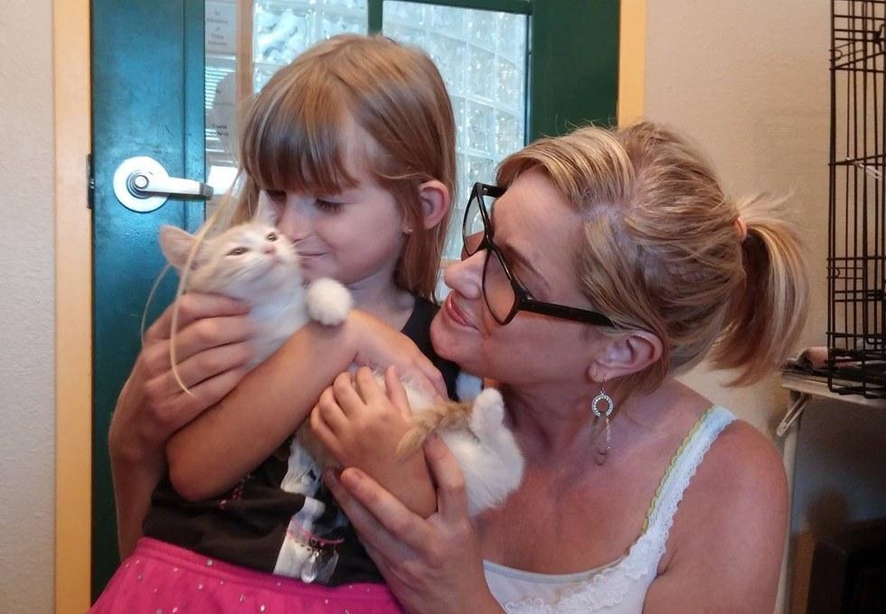 Δύο γάτες αδέρφια που είχαν χωριστεί για 2 χρόνια επανενώθηκαν επειδή οι ιδιοκτήτες τους βγήκαν ραντεβού! γάτος γατί γάτες αδέρφια γάτες Γάτα