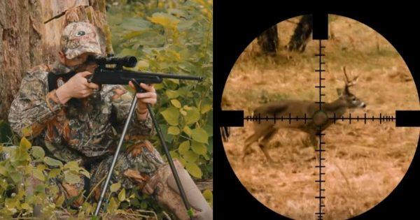 Είχε κλειδώσει τον Στόχο του και ήταν έτοιμος να Πυροβολήσει το Ελάφι. Η Συνέχεια; Θα σας Κόψει την Ανάσα!