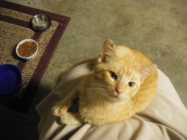 υιοθεσία αδέσποτων Γάτα Αδέσποτη γατούλα αδέσποτη γάτα Αδέσποτα