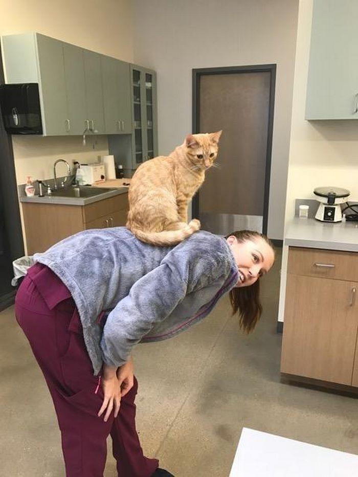 σκυλάκια γάτος