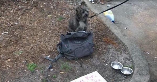 Αυτός ο σκύλος ήταν δεμένος σε έναν κάδο σκουπιδιών και είχε μαζί του ένα λυπητερό σημείωμα