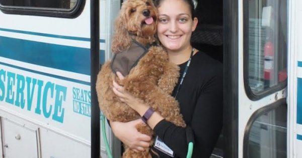 Σκύλος θεραπείας κερδίζει το δικαίωμα να επιβιβάζεται στα μέσα μαζικής μεταφοράς του New Jersey
