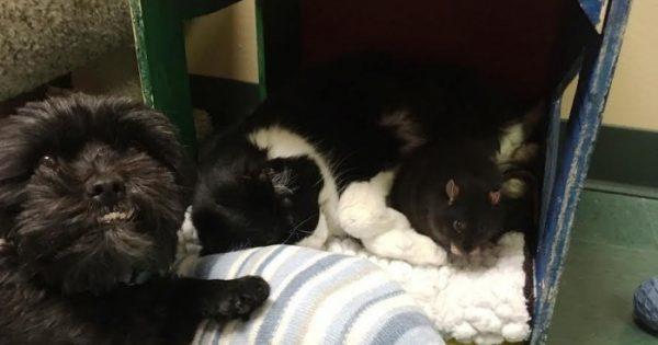 Σκύλος, γάτα και αρουραίος που ζουν σε καταφύγιο ζώων δεν μπορούν να αποχωριστούν ο ένας τον άλλον