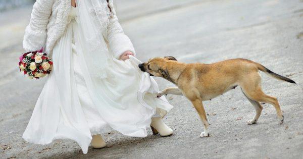 Μπήκε κρυφά στον γάμο, με μια βόμβα κάτω απ'το φόρεμά της. Ένα σκυλί όμως θυσίασε τη ζωή του για τους ανυποψίαστους καλεσμένους.