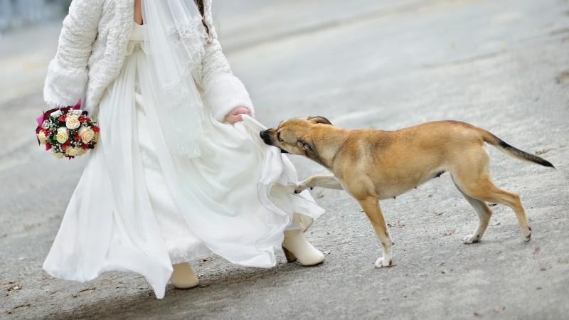 Σκύλος σκύλοι γάμος