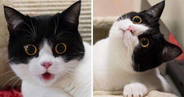 Γνωρίστε την Izzy, την γάτα με το πιο εκφραστικό πρόσωπο!