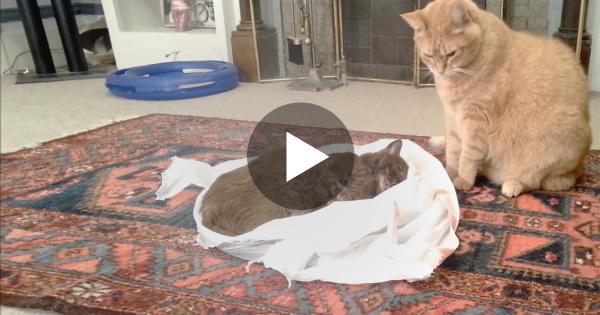 Ο φίλος αυτής της γάτας πέθανε από καρκίνο. Η στιγμή του τελευταίου «αποχαιρετισμού» της, θα σας κάνει να δακρύσετε…