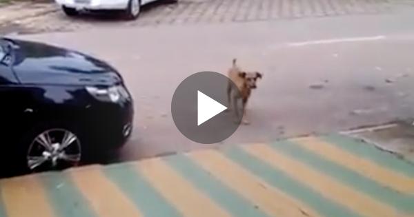 Σκύλος ακούει το ραδιόφωνο ενός αυτοκινήτου και αρχίζει να πλησιάζει. Ο λόγος; Θα σας κάνει να λιώσετε!